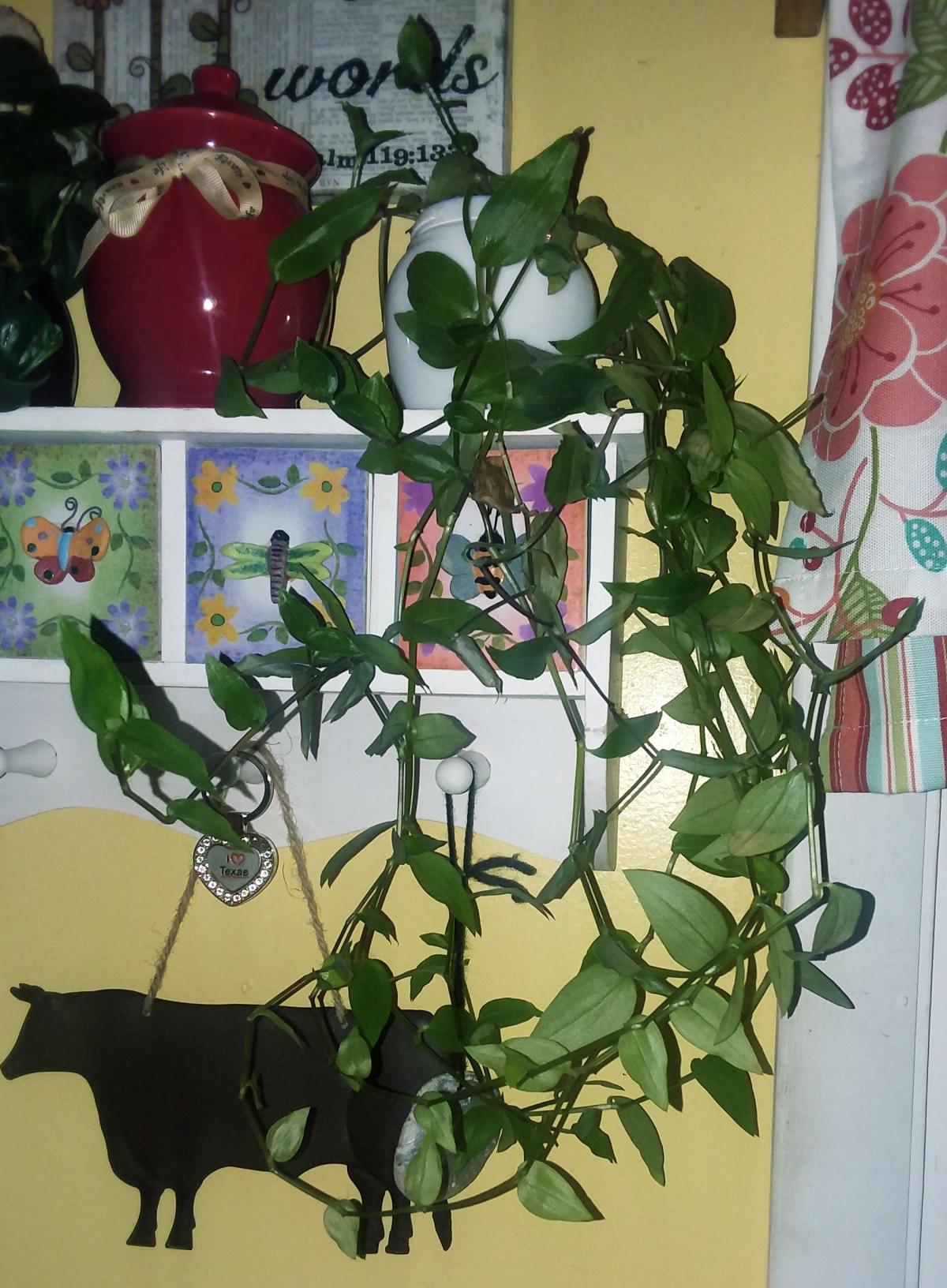 That Plant
